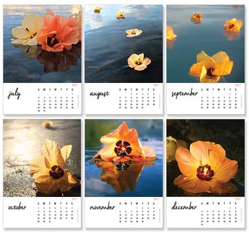 Tropical Hibiscus Calendar