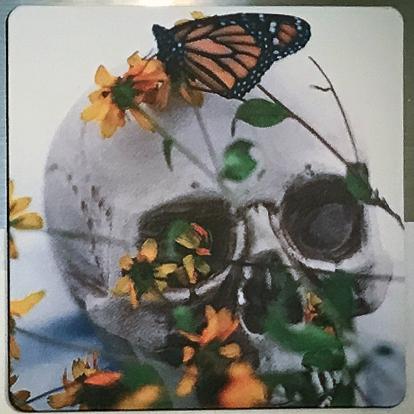 Monarch on Skull